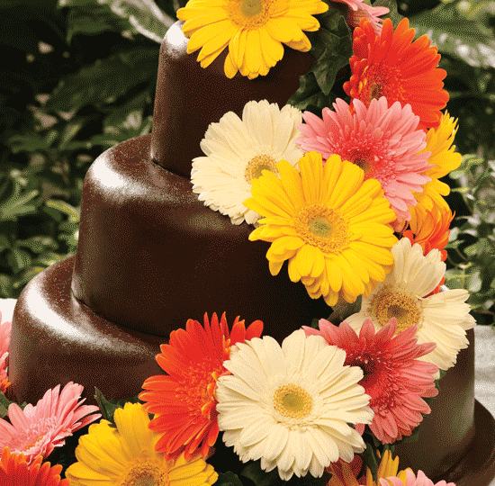 Chocolate stacked with Gerbera Daisies